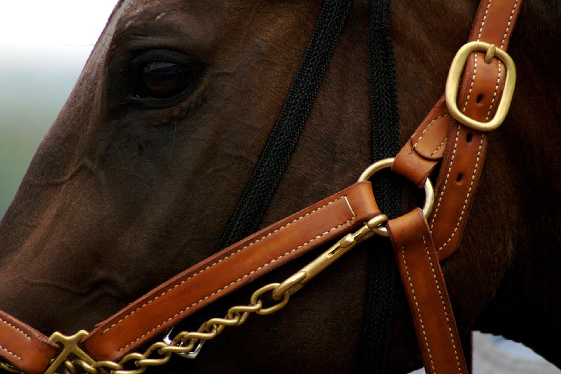 Hillside Harness, Ltd  – Quality Horse Supply & Tack